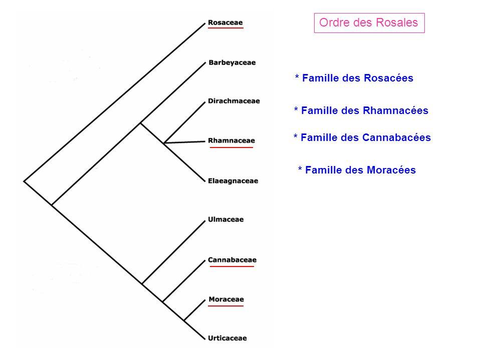 Ordre des Rosales * Famille des Rosacées * Famille des Rhamnacées * Famille des Moracées * Famille des Cannabacées