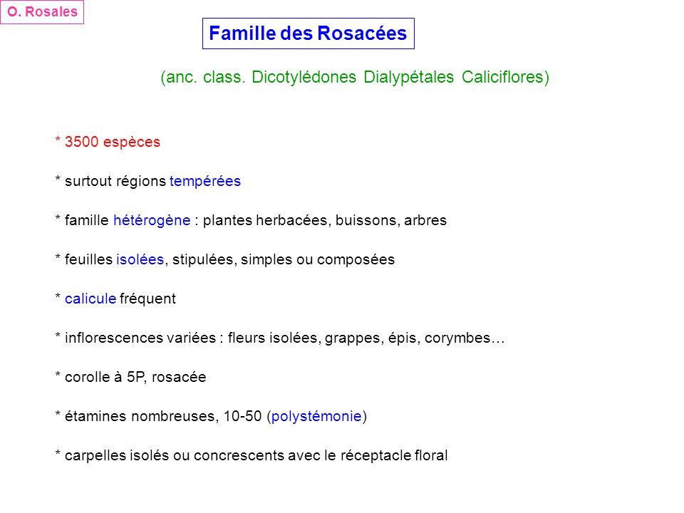Famille des Rosacées (anc. class. Dicotylédones Dialypétales Caliciflores) O. Rosales * 3500 espèces * surtout régions tempérées * famille hétérogène
