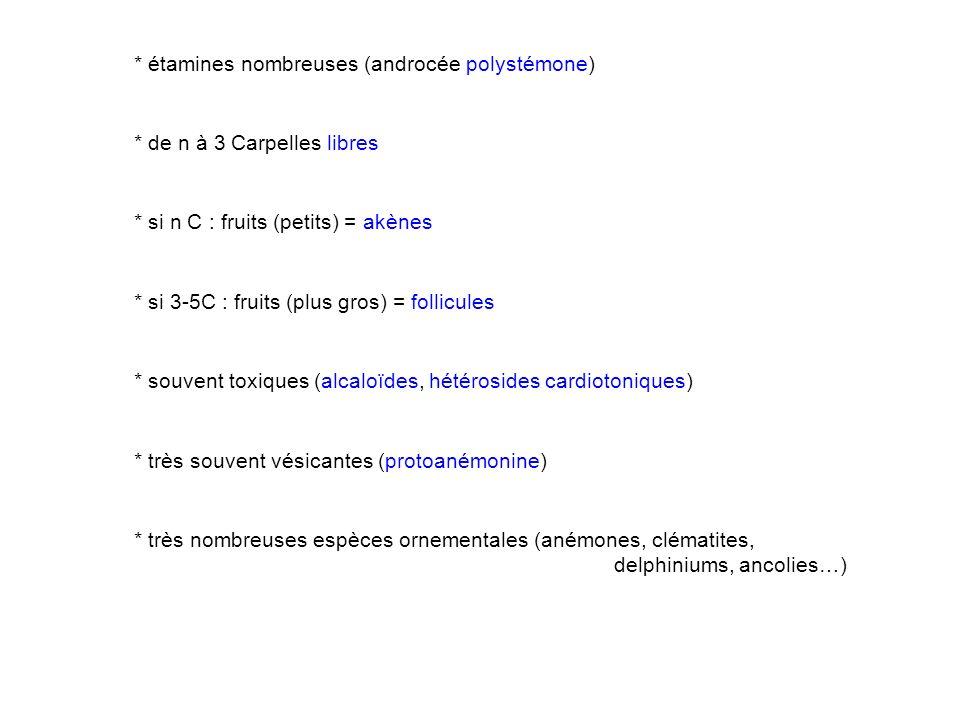 * étamines nombreuses (androcée polystémone) * de n à 3 Carpelles libres * si n C : fruits (petits) = akènes * si 3-5C : fruits (plus gros) = follicules * souvent toxiques (alcaloïdes, hétérosides cardiotoniques) * très souvent vésicantes (protoanémonine) * très nombreuses espèces ornementales (anémones, clématites, delphiniums, ancolies…)