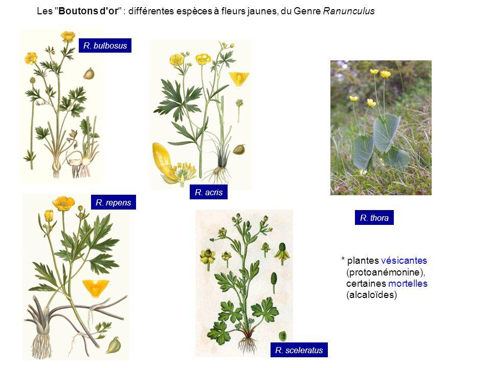 Famille des Rosacées (anc.class. Dicotylédones Dialypétales Caliciflores) O.