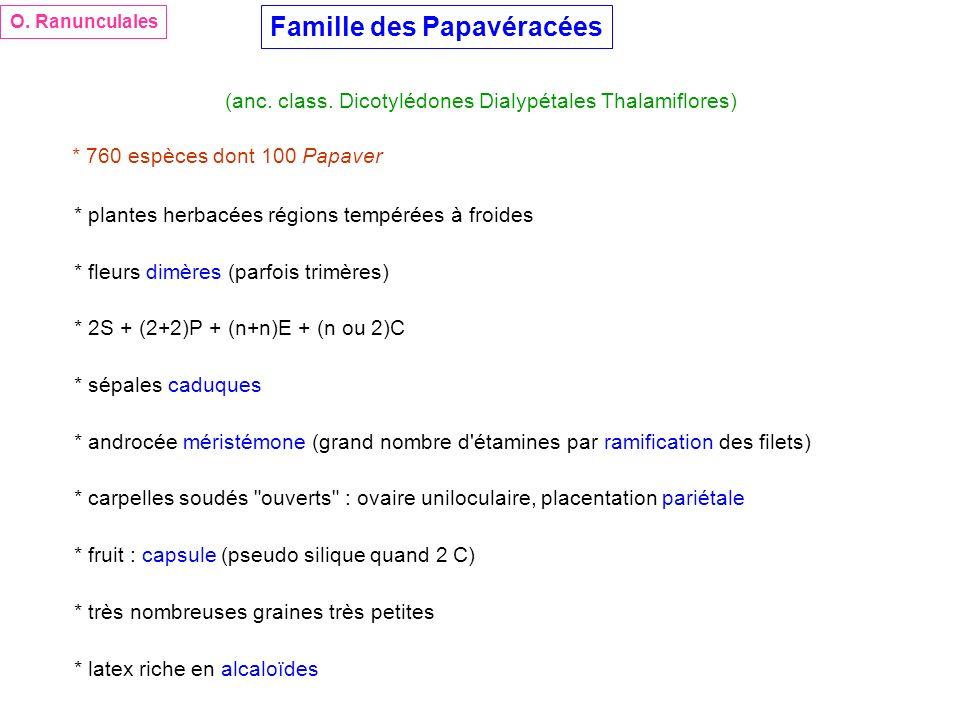 Famille des Papavéracées (anc. class. Dicotylédones Dialypétales Thalamiflores) * 760 espèces dont 100 Papaver * plantes herbacées régions tempérées à