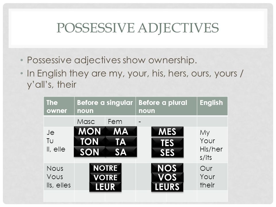 POSSESSIVE ADJECTIVES Possessive adjectives show ownership.