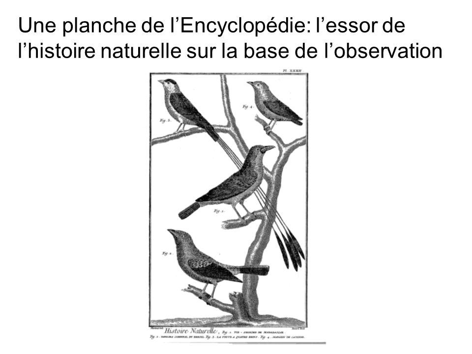 Une planche de lEncyclopédie: lessor de lhistoire naturelle sur la base de lobservation