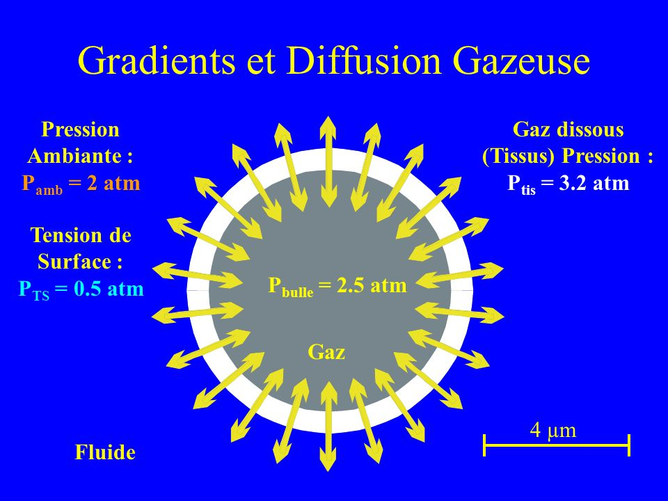 Gradients et Diffusion Gazeuse 4 µm Fluide Dissolved Gas (Tissue) Pressure: P tis 1.6 atm Pression Ambiante : P amb = 2 atm Tension de Surface : P TS