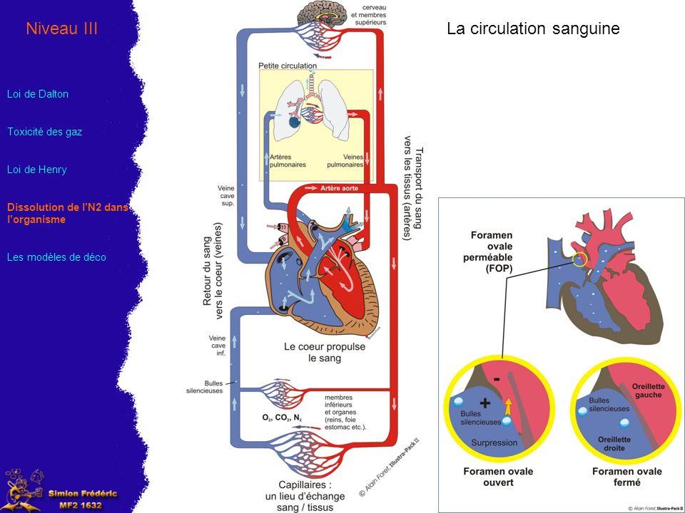 La circulation sanguineNiveau III Loi de Dalton Toxicité des gaz Loi de Henry Dissolution de lN2 dans lorganisme Les modèles de déco