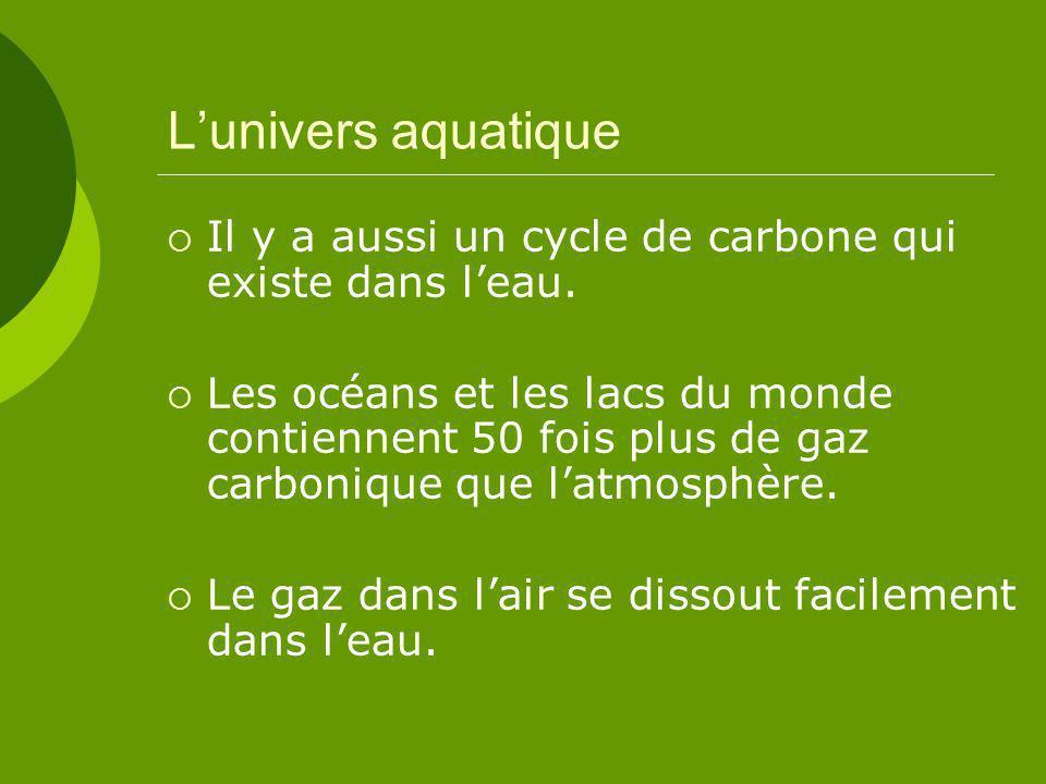 Lunivers aquatique Il y a aussi un cycle de carbone qui existe dans leau.