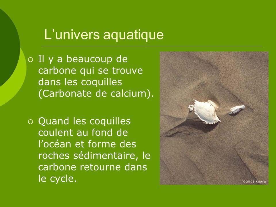 Lunivers aquatique Il y a beaucoup de carbone qui se trouve dans les coquilles (Carbonate de calcium).