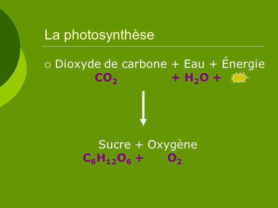 La photosynthèse Dioxyde de carbone + Eau + Énergie CO 2 + H 2 O + Sucre + Oxygène C 6 H 12 O 6 + O 2
