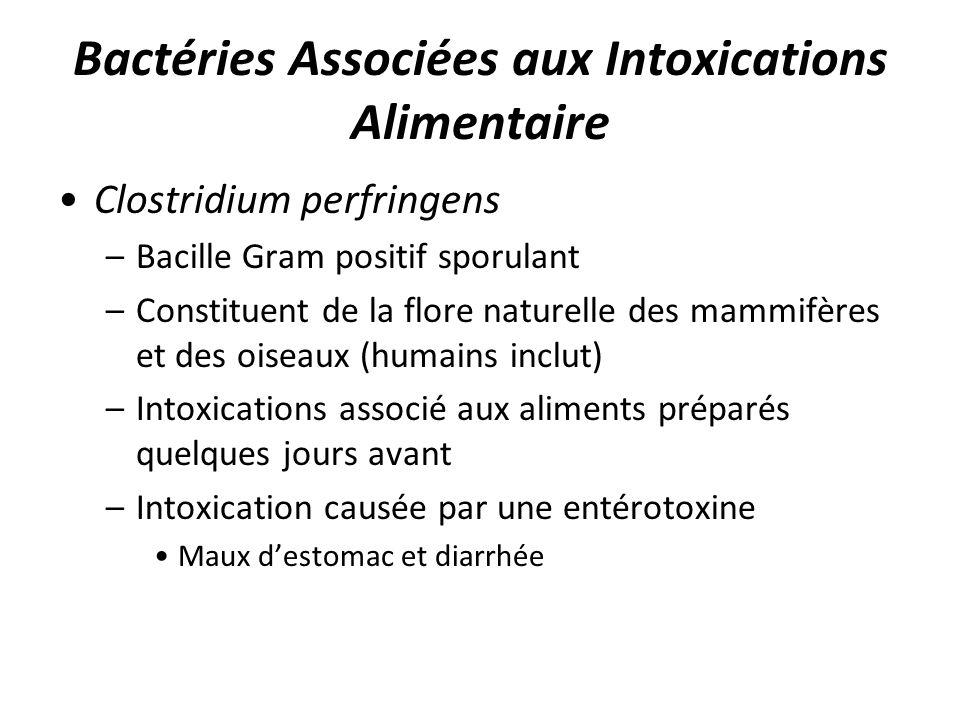 Bactéries Associées aux Intoxications Alimentaire Clostridium perfringens –Bacille Gram positif sporulant –Constituent de la flore naturelle des mammi