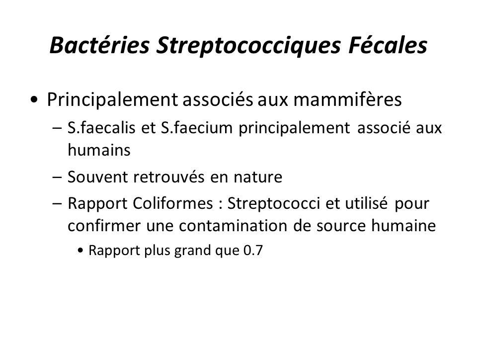 Bactéries Streptococciques Fécales Principalement associés aux mammifères –S.faecalis et S.faecium principalement associé aux humains –Souvent retrouv