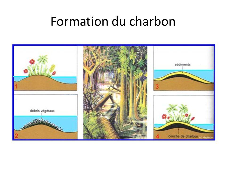 Formation du charbon