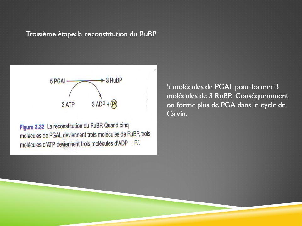 Troisième étape: la reconstitution du RuBP 5 molécules de PGAL pour former 3 molécules de 3 RuBP. Conséquemment on forme plus de PGA dans le cycle de