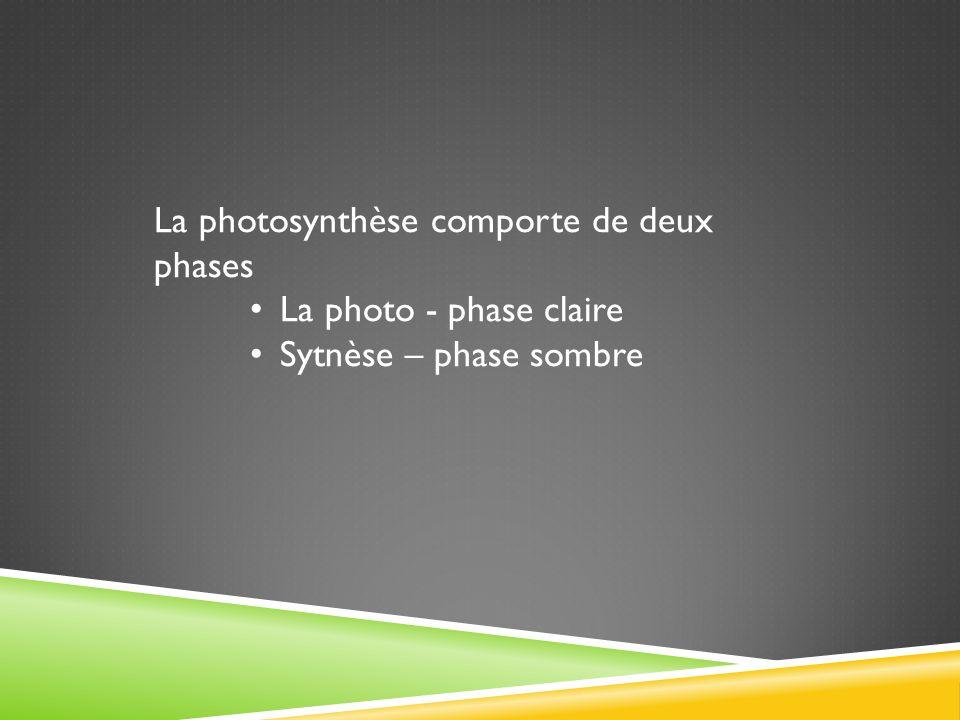 La photosynthèse comporte de deux phases La photo - phase claire Sytnèse – phase sombre