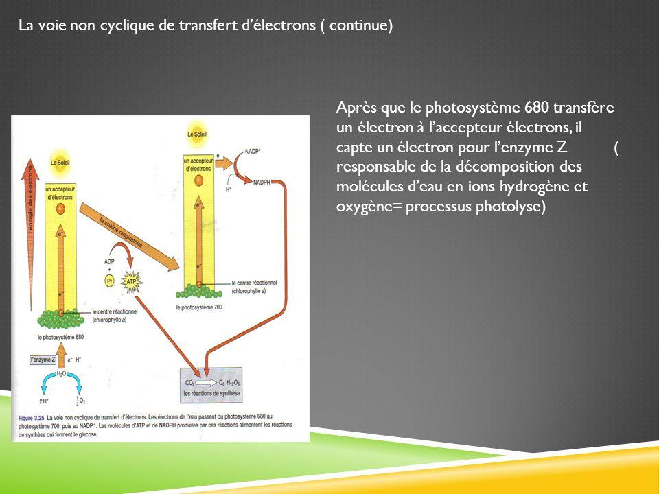 La voie non cyclique de transfert délectrons ( continue) Après que le photosystème 680 transfère un électron à laccepteur électrons, il capte un élect