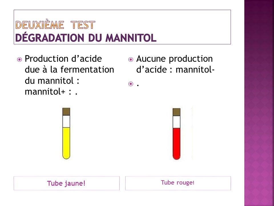 Tube jaune! Tube rouge ! Production dacide due à la fermentation du mannitol : mannitol+ :. Aucune production dacide : mannitol-.