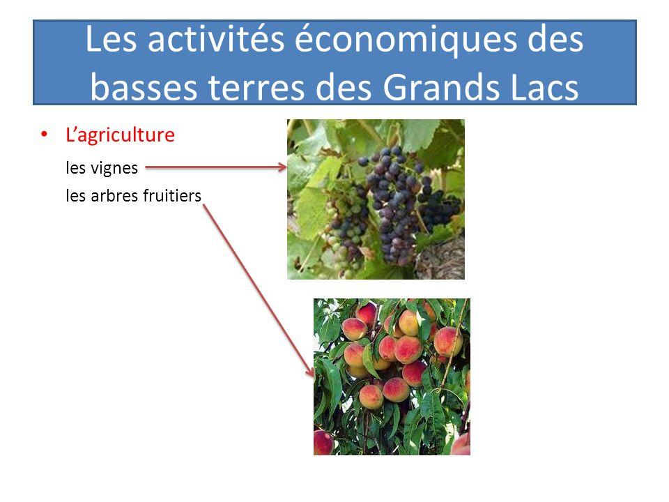 Les activités économiques des basses terres des Grands Lacs Lagriculture les vignes les arbres fruitiers