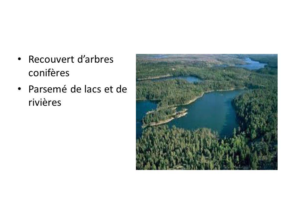 Recouvert darbres conifères Parsemé de lacs et de rivières