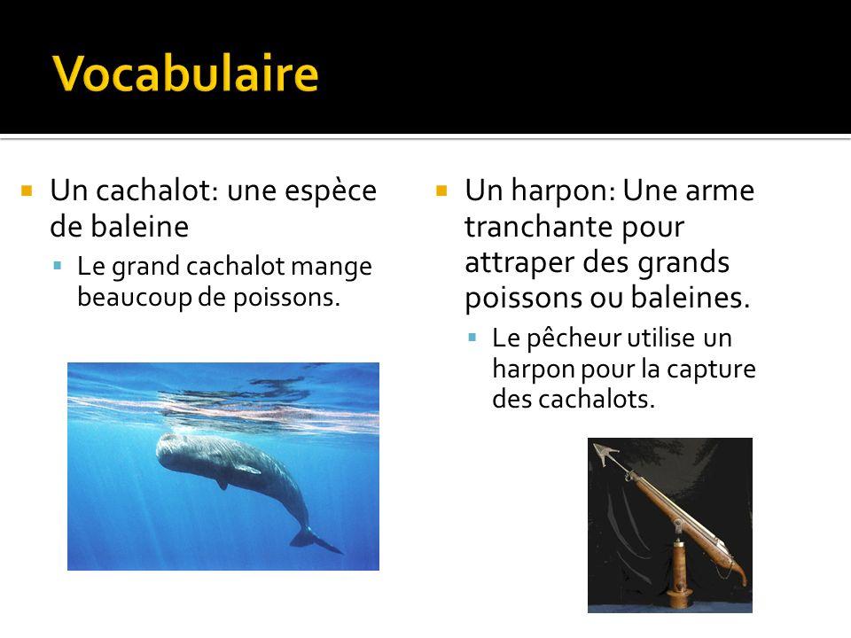 Un cachalot: une espèce de baleine Le grand cachalot mange beaucoup de poissons.