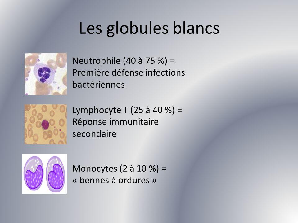 Les globules blancs Neutrophile (40 à 75 %) = Première défense infections bactériennes Lymphocyte T (25 à 40 %) = Réponse immunitaire secondaire Monoc