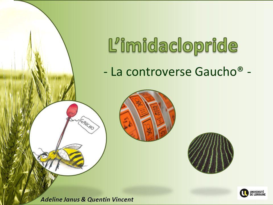 - La controverse Gaucho® - Adeline Janus & Quentin Vincent