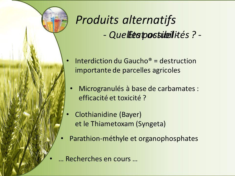 - Etat actuel -- Quelles possibilités ? - Produits alternatifs Interdiction du Gaucho® = destruction importante de parcelles agricoles Microgranulés à