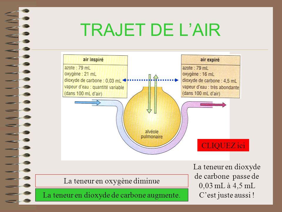TRAJET DE LAIR La teneur en oxygène diminue La teneur en dioxyde de carbone augmente.