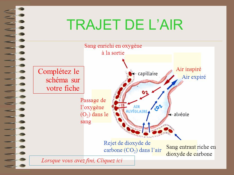 TRAJET DE LAIR Complétez le schéma sur votre fiche Air inspiré Air expiré Rejet de dioxyde de carbone (CO 2 ) dans lair Passage de loxygène (O 2 ) dans le sang Sang enrichi en oxygène à la sortie Sang entrant riche en dioxyde de carbone Lorsque vous avez fini, Cliquez ici