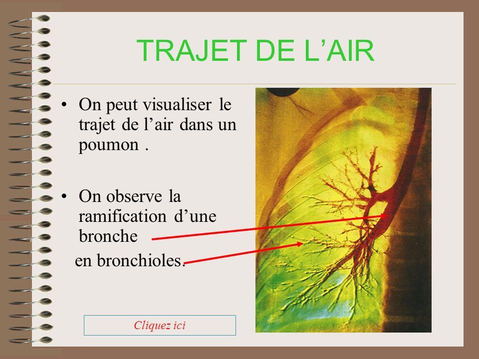TRAJET DE LAIR Air inspiré (riche en oxygène) Sang entrant riche en dioxyde de carbone CO 2 O 2 Rejet de dioxyde de carbone (CO 2 )dans lair Passage de loxygène (O 2 ) dans le sang Sang enrichi en oxygène à la sortie Air expiré (riche en dioxyde de carbone) Cliquez ici