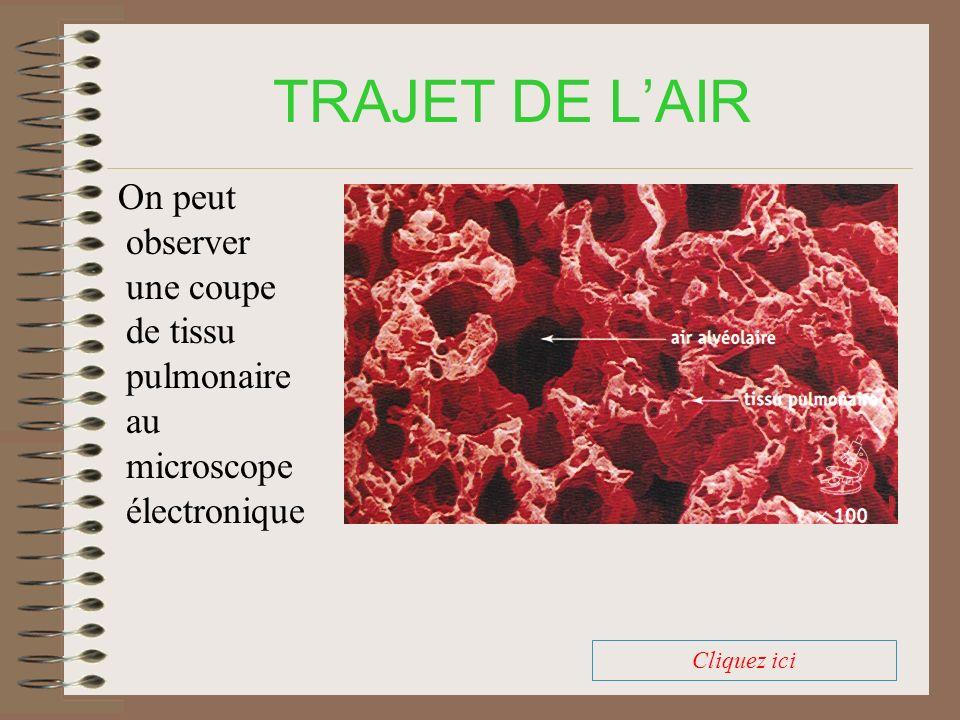 TRAJET DE LAIR Comparez les valeurs, puis, au signal, CLIQUEZ sur la phrase incorrecte: La teneur en azote est stableLa teneur en oxygène diminue La teneur en dioxyde de carbone diminue.