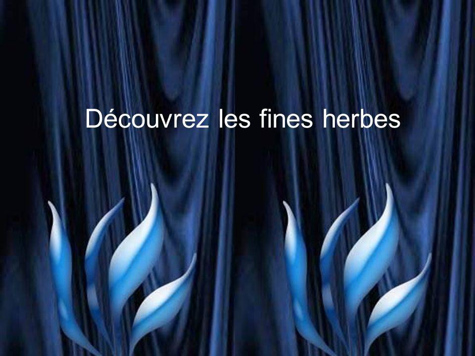 La sarriette est une plante aromatique.