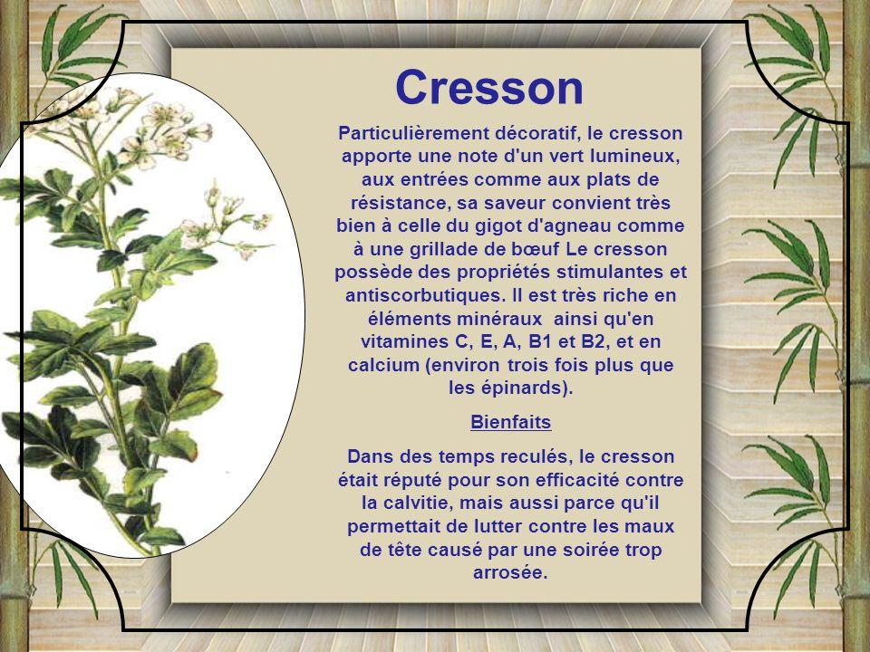 La coriandre fraîche ressemble au persil plat; elle s'utilise comme le persil et le cerfeuil. En Orient, on la met dans les salades, les soupes, les s