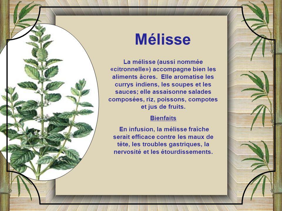 L'odeur et la saveur de la marjolaine rappellent la menthe et le basilic. Elle aromatise les mets à la tomate, les vinaigrettes, les farces, les légum
