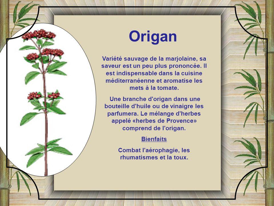 Cette herbe assaisonne légumes (aubergine, concombre, pois, tomate), viande, gibier et crème glacée. Elle est délicieuse mélangée au citron et aromati