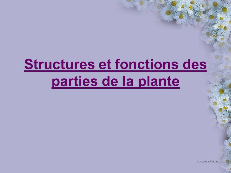 Structures et fonctions des parties de la plante