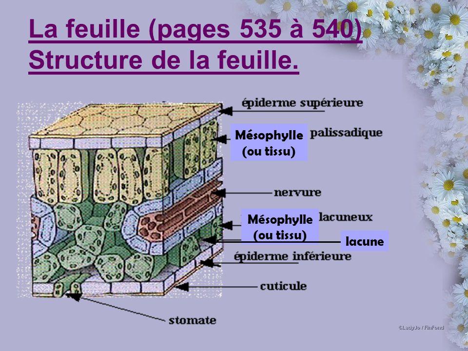 La feuille (pages 535 à 540) Structure de la feuille. Mésophylle (ou tissu) lacune