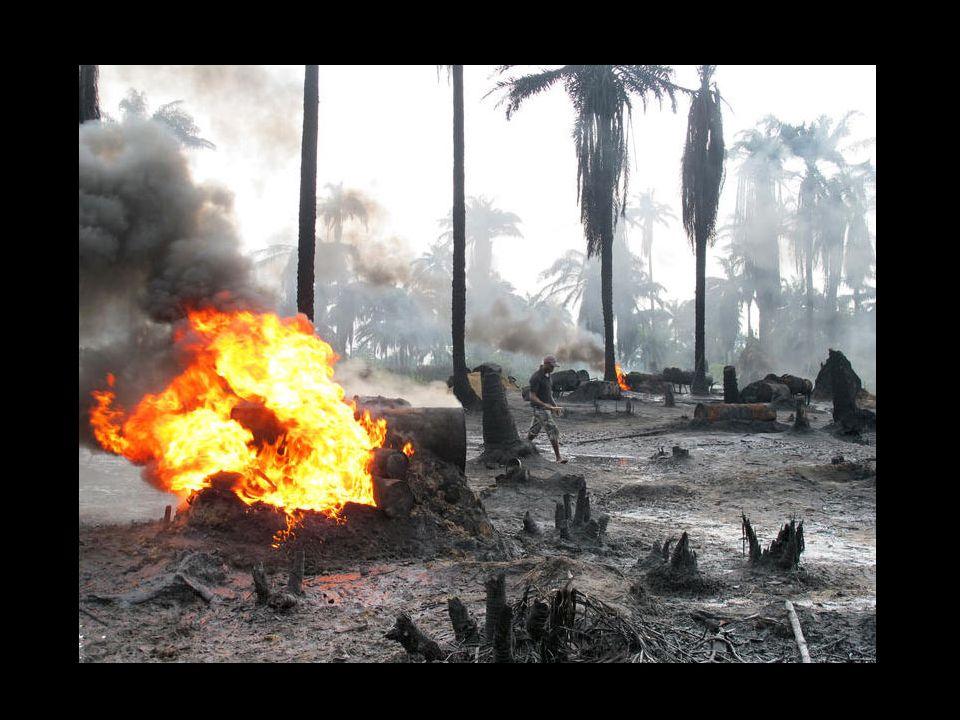 Selon les Amis de la Terre, la situation est dramatique, qu il s agisse d environnement ou de dialogue avec les populations impactées par les activités de Shell, Eni et Total .