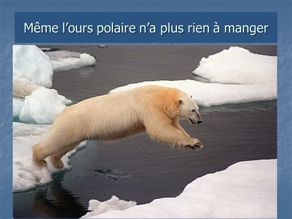 Même lours polaire na plus rien à manger