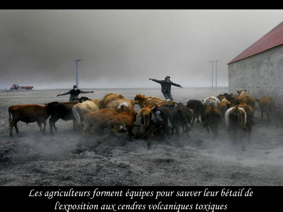 Un agriculteur constate le dépôt des cendres volcaniques boueuses sur ses terres