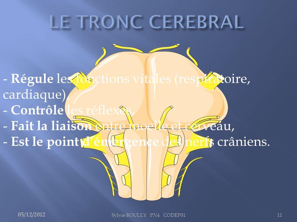 Sylvie BOULLY PN4 CODEP0111 - Régule les fonctions vitales (respiratoire, cardiaque), - Contrôle les réflexes, - Fait la liaison entre moelle et cerve