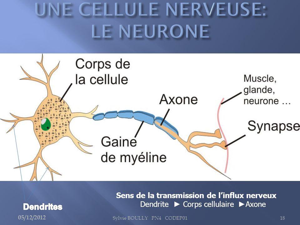Sylvie BOULLY PN4 CODEP0118 Sens de la transmission de linflux nerveux Dendrite Corps cellulaire Axone 05/12/2012