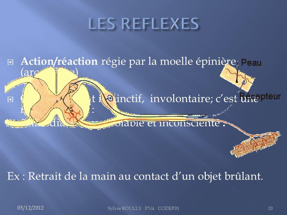 Action/réaction régie par la moelle épinière (arc réflexe) Comportement instinctif, involontaire; cest une réponse innée : immédiate, incontrôlable et