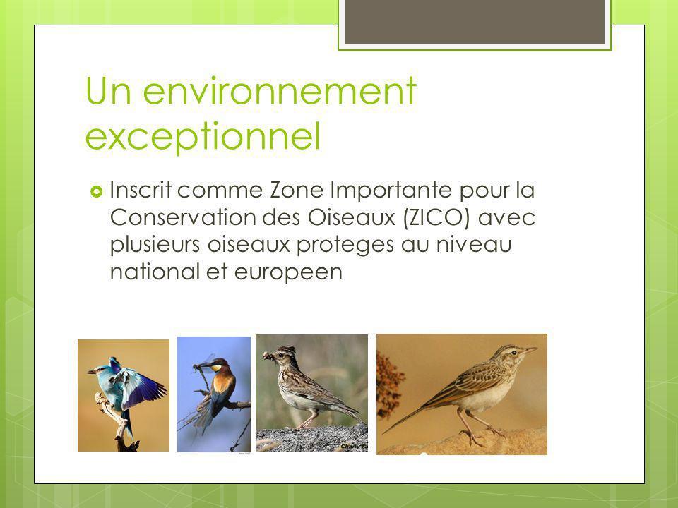 Un environnement exceptionnel Inscrit comme Zone Importante pour la Conservation des Oiseaux (ZICO) avec plusieurs oiseaux proteges au niveau national