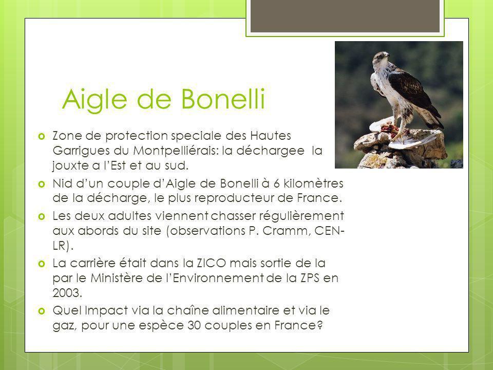 Aigle de Bonelli Zone de protection speciale des Hautes Garrigues du Montpelliérais: la déchargee la jouxte a lEst et au sud. Nid dun couple dAigle de