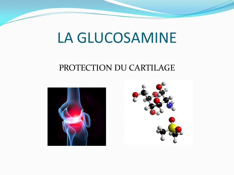 LA GLUCOSAMINE PROTECTION DU CARTILAGE