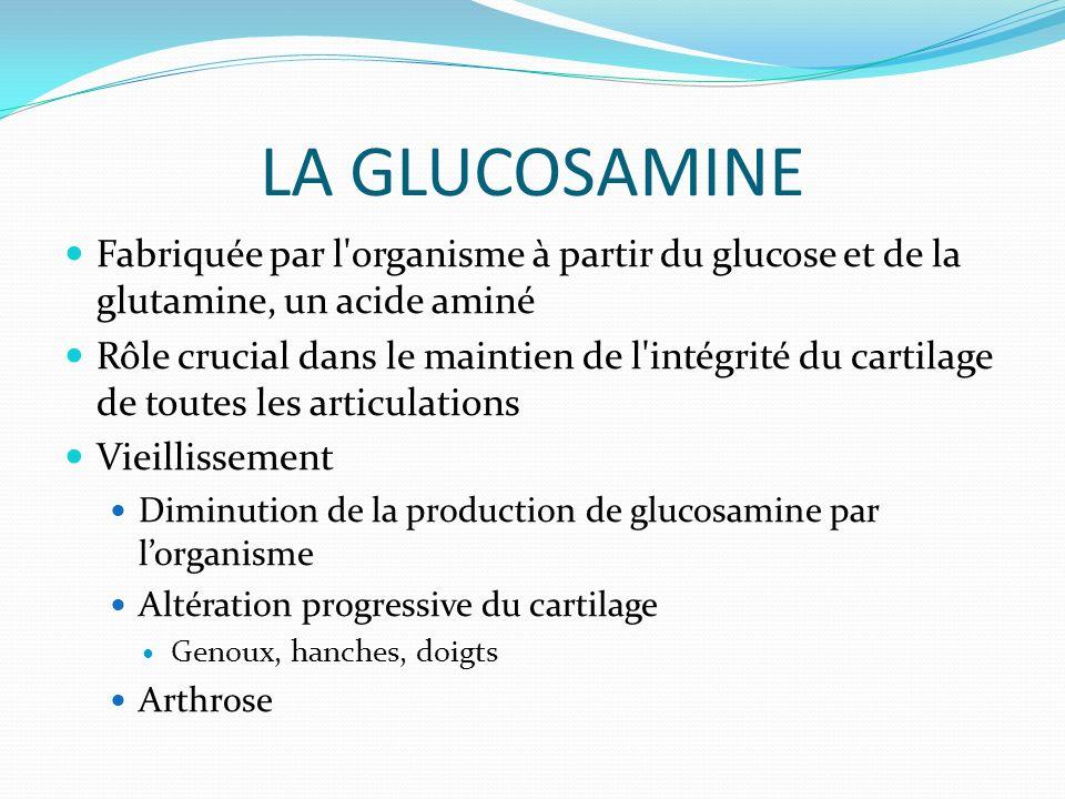LA GLUCOSAMINE Fabriquée par l organisme à partir du glucose et de la glutamine, un acide aminé Rôle crucial dans le maintien de l intégrité du cartilage de toutes les articulations Vieillissement Diminution de la production de glucosamine par lorganisme Altération progressive du cartilage Genoux, hanches, doigts Arthrose