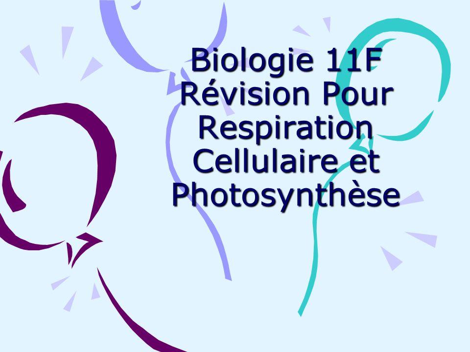 Biologie 11F Révision Pour Respiration Cellulaire et Photosynthèse