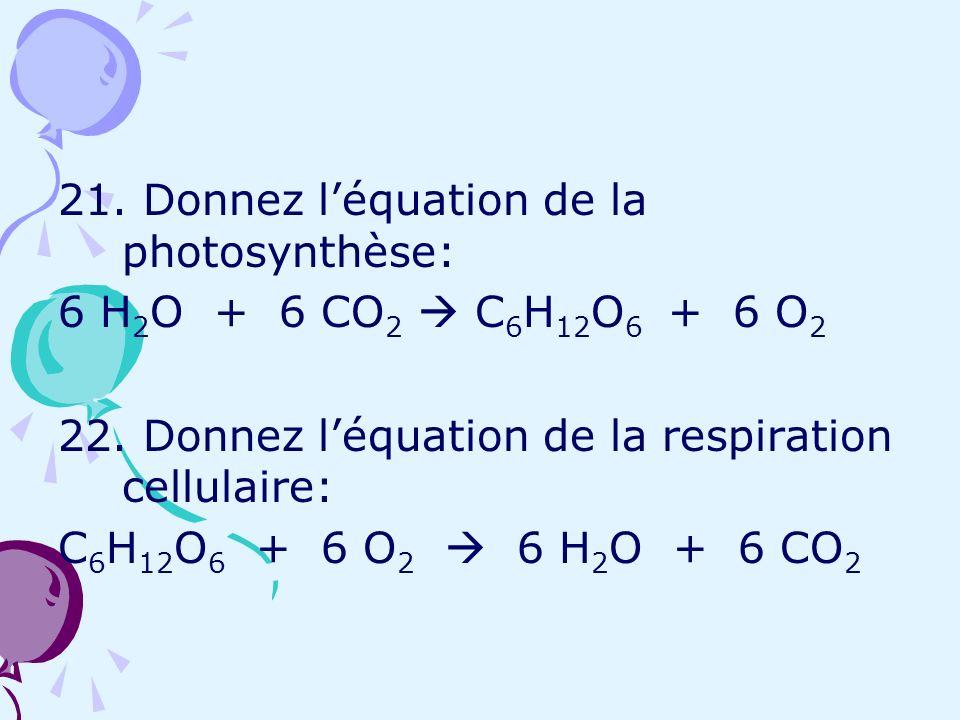 21. Donnez léquation de la photosynthèse: 6 H 2 O + 6 CO 2 C 6 H 12 O 6 + 6 O 2 22. Donnez léquation de la respiration cellulaire: C 6 H 12 O 6 + 6 O