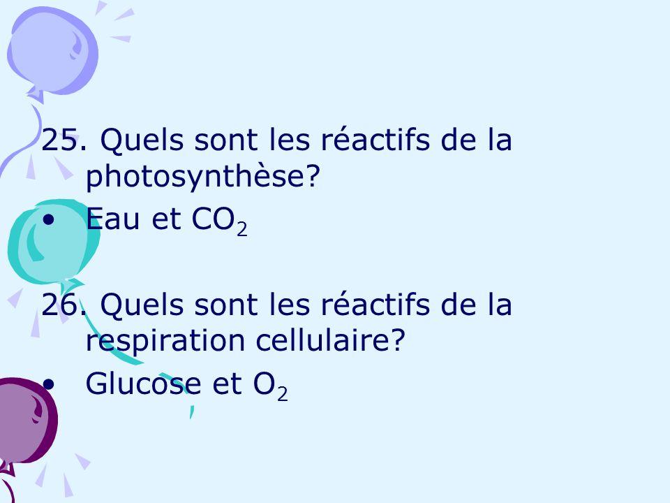 25. Quels sont les réactifs de la photosynthèse? Eau et CO 2 26. Quels sont les réactifs de la respiration cellulaire? Glucose et O 2