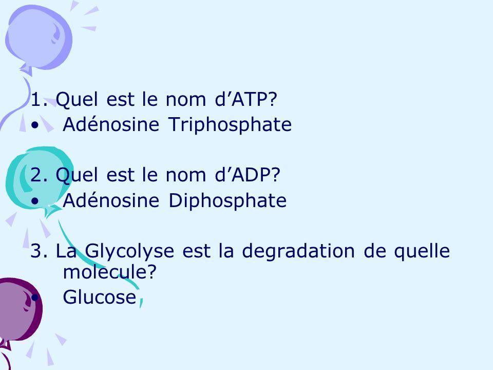 1. Quel est le nom dATP? Adénosine Triphosphate 2. Quel est le nom dADP? Adénosine Diphosphate 3. La Glycolyse est la degradation de quelle molecule?