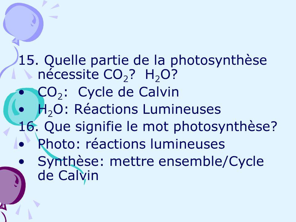 15. Quelle partie de la photosynthèse nécessite CO 2 ? H 2 O? CO 2 : Cycle de Calvin H 2 O: Réactions Lumineuses 16. Que signifie le mot photosynthèse